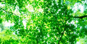 森林のエキス育ち